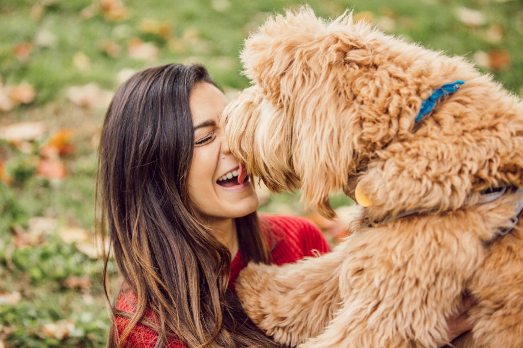 goldendoodle kisses